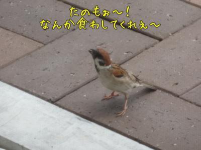 kako-eCCTHJKx1WpDhMp9_convert_20130620105803.jpg