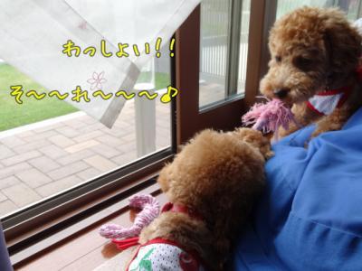 kako-kOcyRwNuOZMpZFON_convert_20130620110021.jpg
