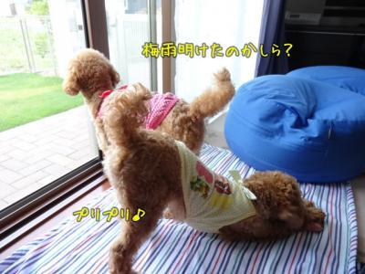 kako-o0b6KeTST2fo1ux5_convert_20130627091550.jpg