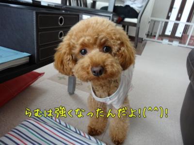 kako-oSoUzkYr0RiIu60I_convert_20130716131909.jpg