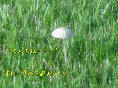 kako-pHhOYsmIEl0YEyy5_convert_20130710101937.jpg