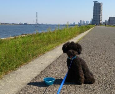 淀川沿い休憩