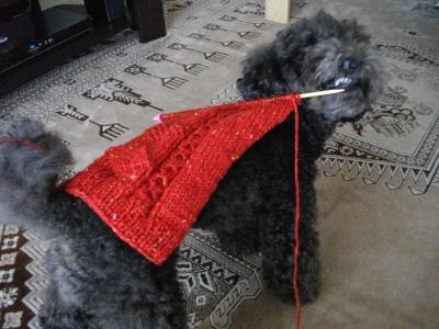 ニット編み棒噛む1