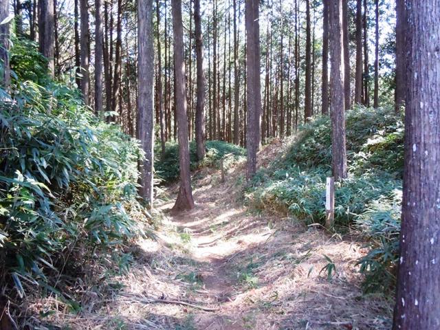 亀山城(三河) (45)