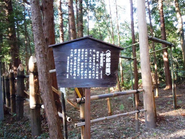 野田城(三河) (5)