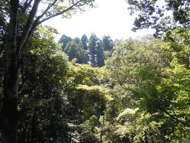 長篠城 (33)