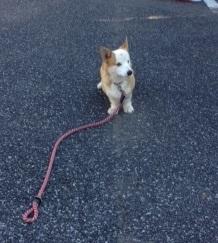 ポール散歩練習写真