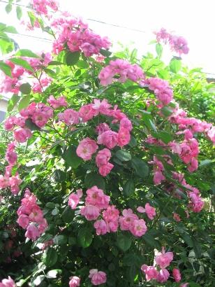 5月の庭 058 (308x410)