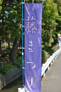 加須市騎西の藤003
