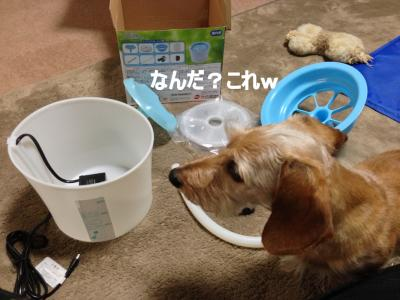 IMG_0408ブログ用_R