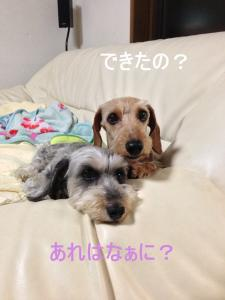 IMG_0416ブログ用_R