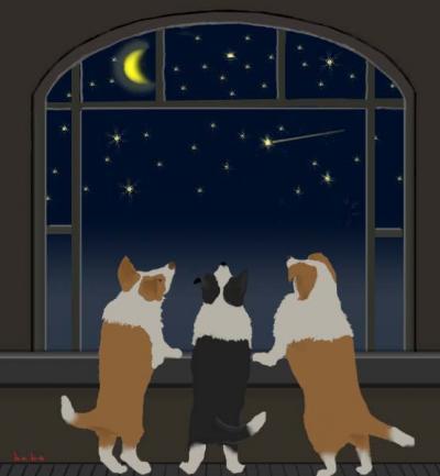 みんなで お星さま☆見てる。。。