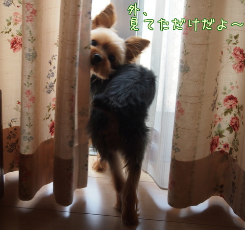 20130817②おうち記念