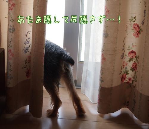 20130817①おうち記念