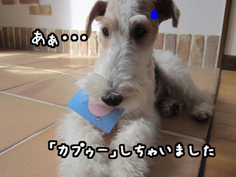 3_20130610163349.jpg