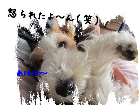 5_20130427125345.jpg