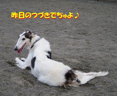 a_2013113008544775b.jpg