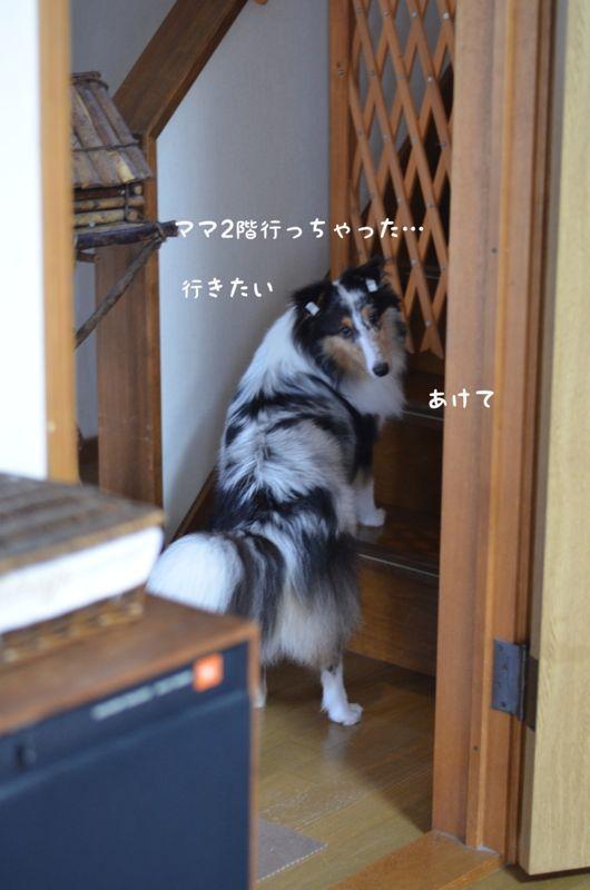 IMG_8110.jpg