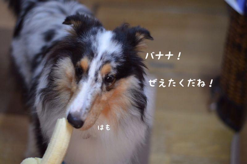 IMG_8446.jpg