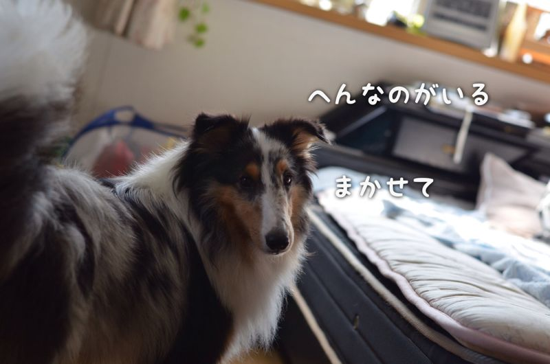 IMG_8460.jpg