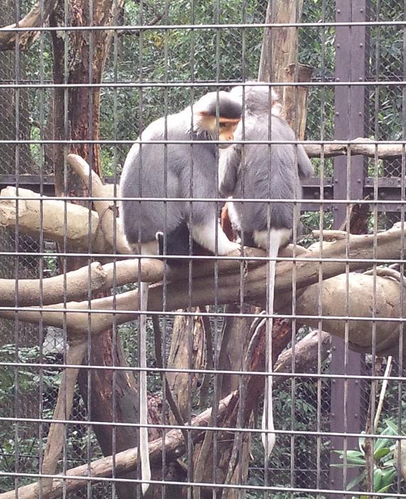 20131101_携帯_動物園3