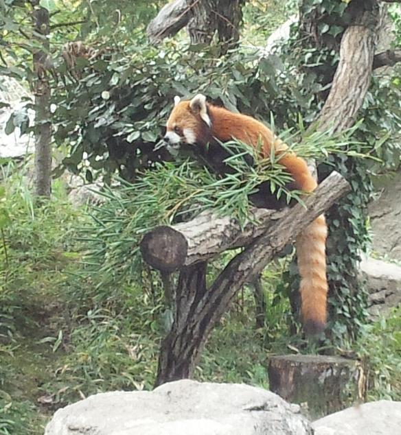 20131101_携帯_動物園5