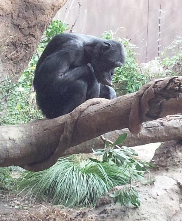 20131101_携帯_動物園10