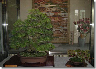 盆栽-5.jpg
