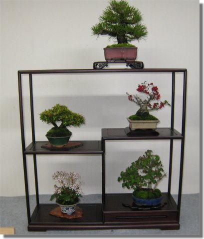 盆栽-6.jpg
