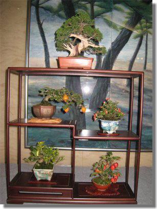 盆栽-1.jpg