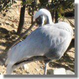 鳥7.jpg