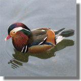 鳥8.jpg
