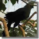 鳥9.jpg