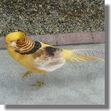 鳥11.jpg