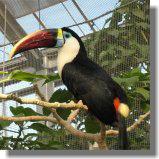 鳥12.jpg