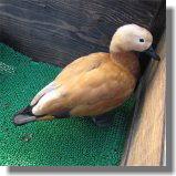 鳥14.jpg