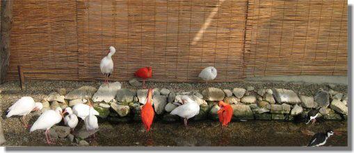 鳥13.jpg