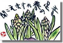 ヒヤシンスー2.jpg