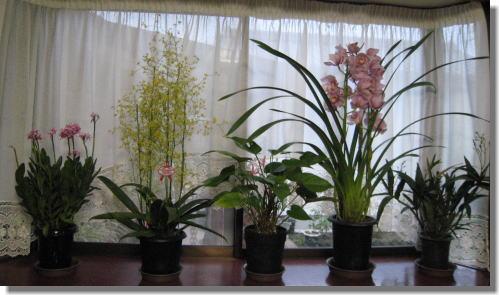 出窓の花.jpg