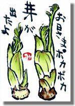 タラの芽ー1.jpg