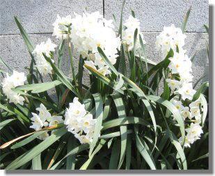 花ー11.jpg
