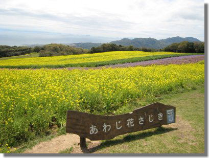 花さじきー1.jpg