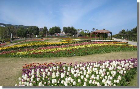 明石海峡公園ー3.jpg