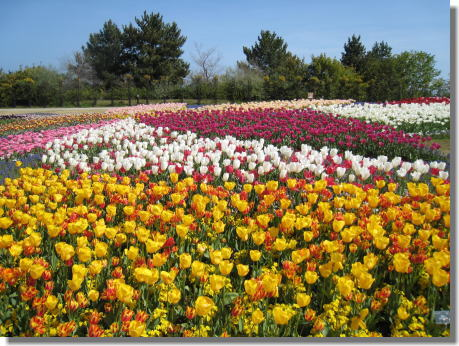 明石海峡公園ー6.jpg