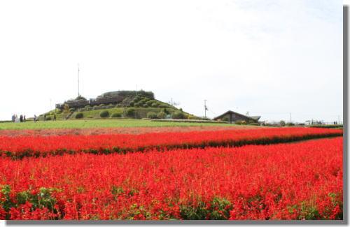 花さじきー4.jpg