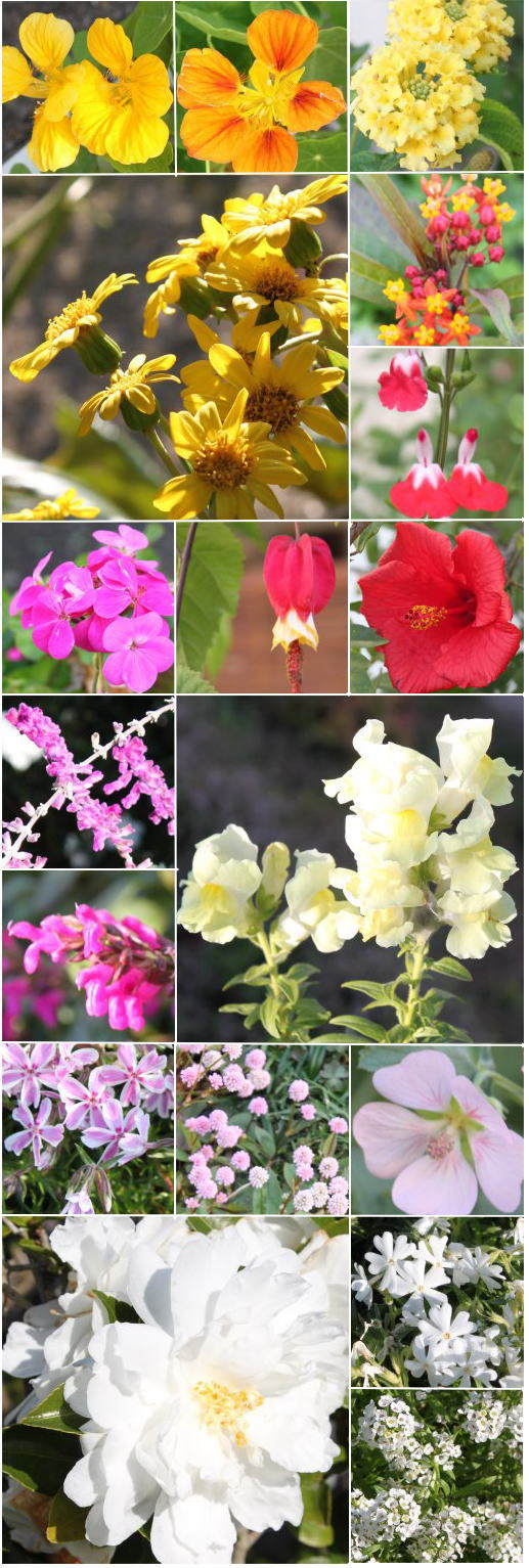 12月の花.jpg
