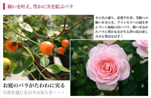 プリンセスロード.jpg