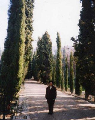 糸杉.jpg