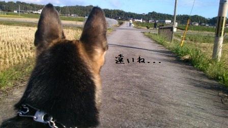 20131024132700374.jpg