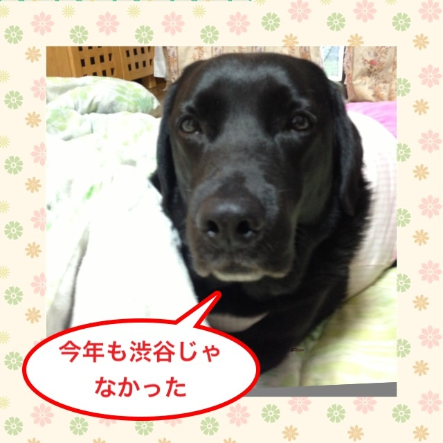 image_20130528180152.jpg